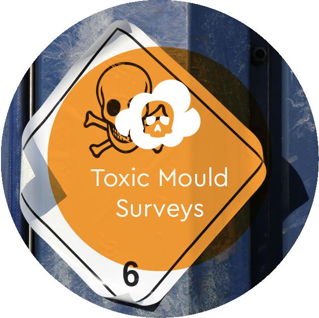 Toxic Mould Surveys